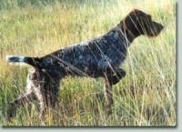 Vorstehhunde