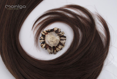 15 Haarspange 4cm-Rehbockrose_7659 hp1