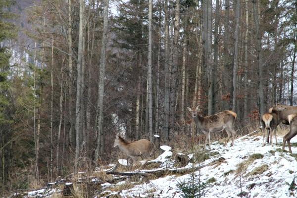 Österreich braucht die Jagd