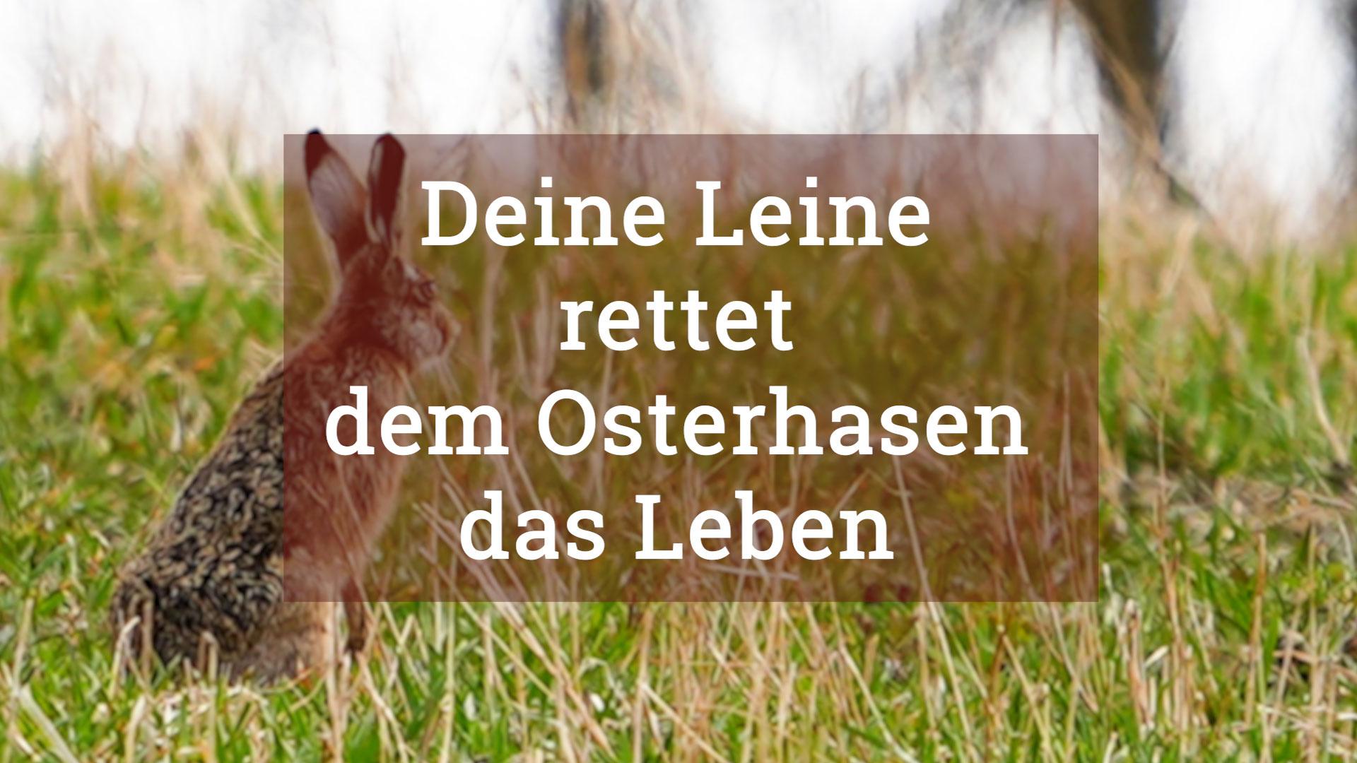 Osterhase (1)